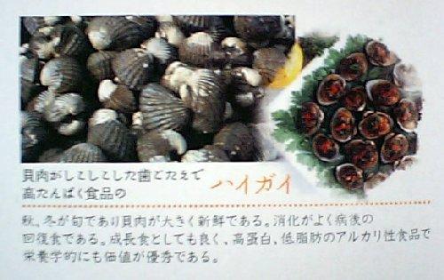 パンフレットの灰貝