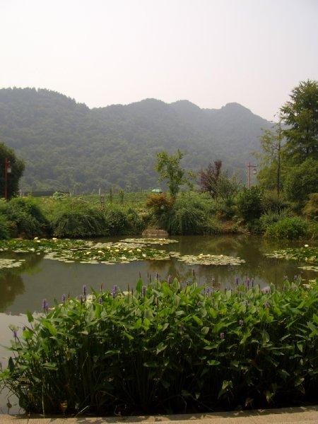 杭州09茶葉博物館前の景色