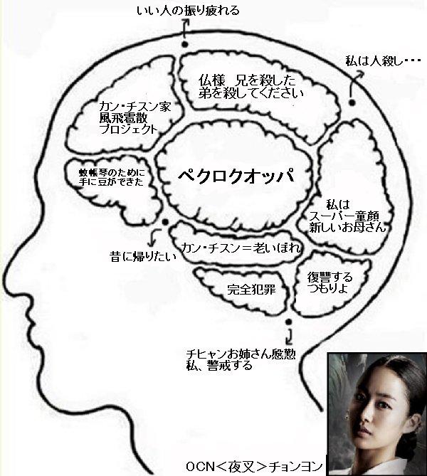 チョンヨンの脳構造