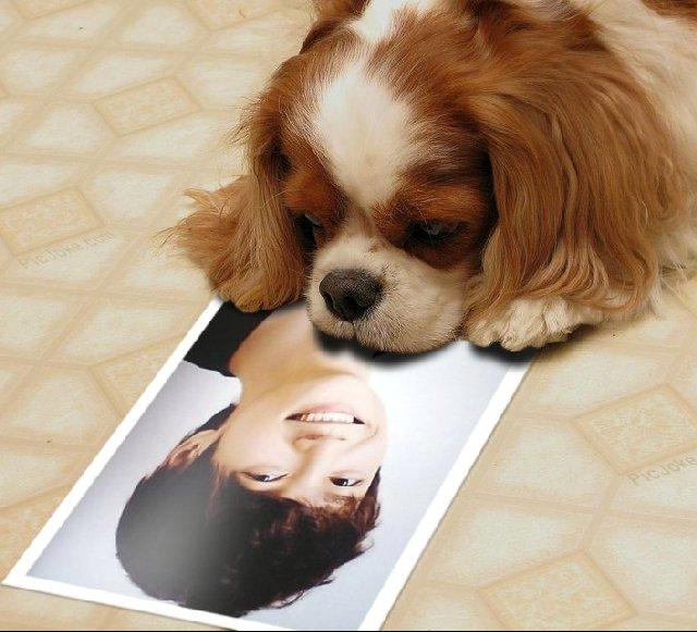 犬とソ・ドヨン
