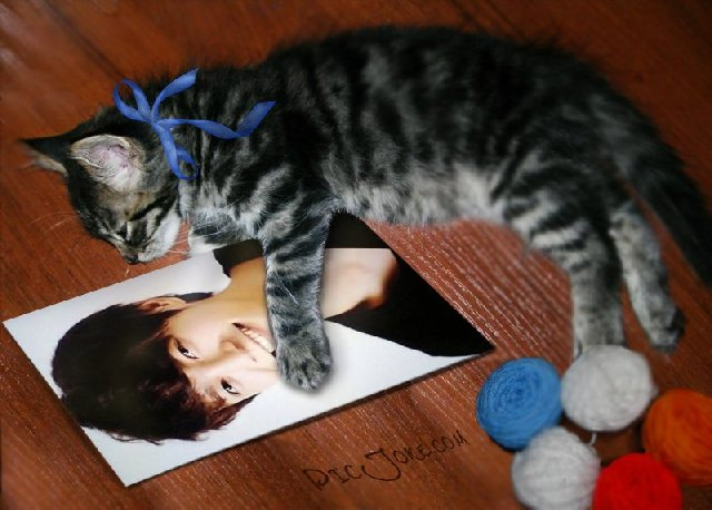 仔猫とソ・ドヨン