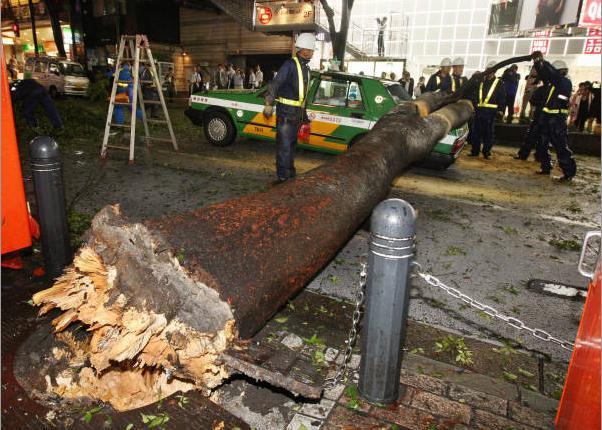 渋谷道玄坂の倒木