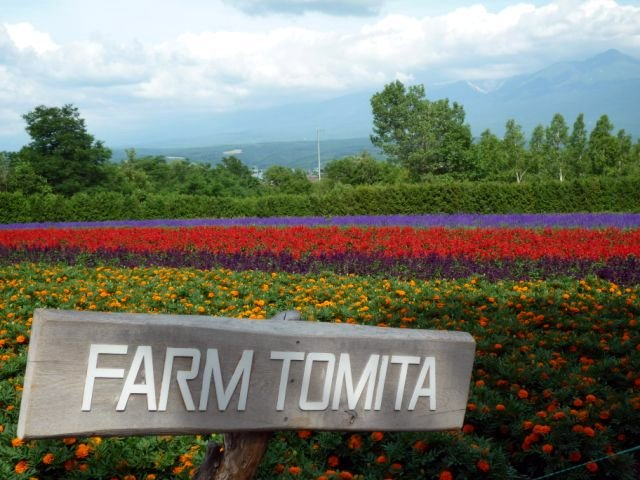 FarmTomita5.jpg