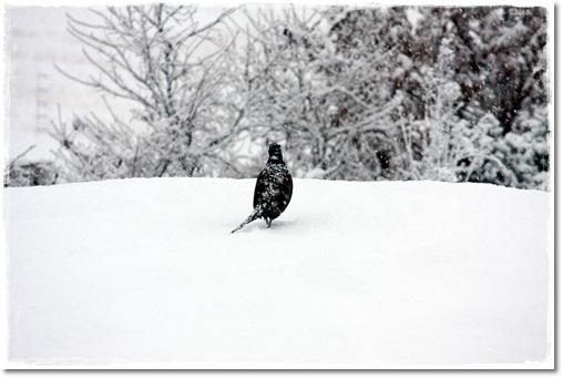 大雪の元旦3
