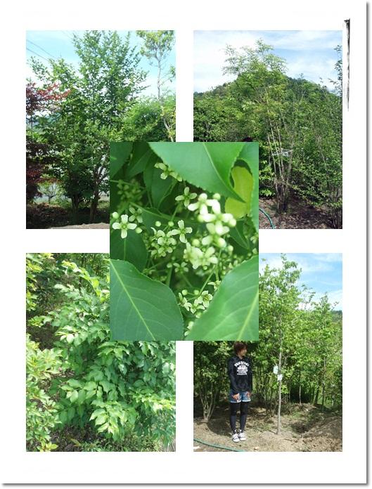 2011・5・26・大江農園