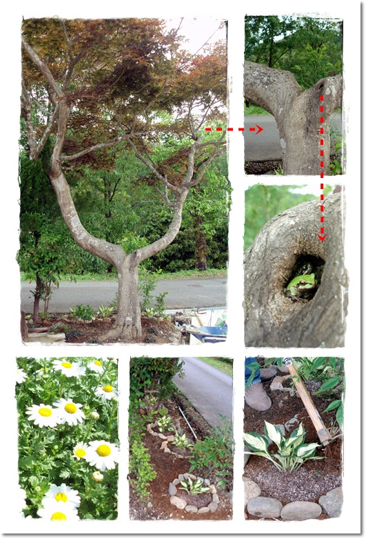 2011・5・31・木の住人