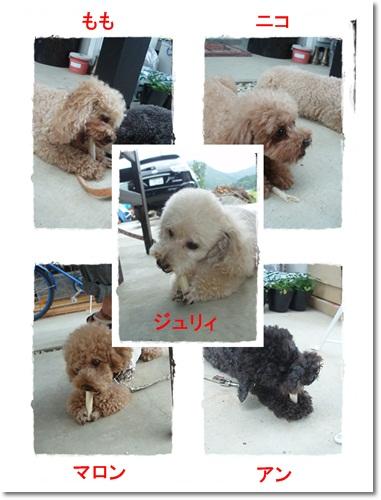 2011・7・18・せっちゃんとBBQ-7