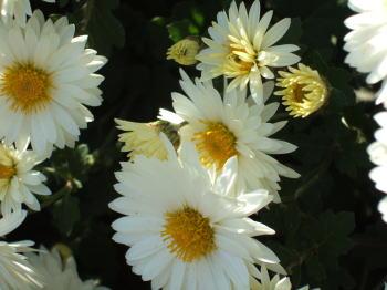 2005_11090004.jpg