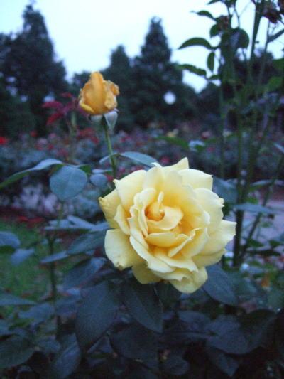 2006_06190003.jpg