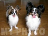 エリィー&デイジー