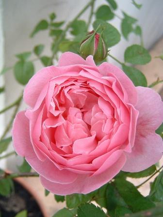 mary-rose08-10.jpg