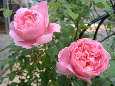 mary-rose08-9.jpg