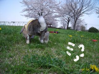 お花見☆瑠夏