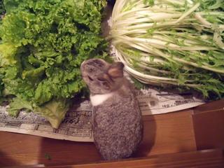 野菜と来夢