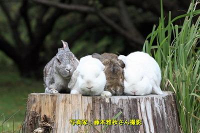 藤本雅秋さん撮影写真