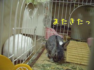 すみれ☆来夢