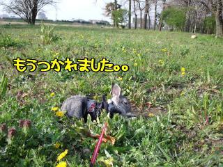 たんぽぽ畑☆来夢
