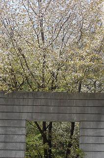 リゾナーレ桜
