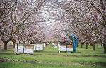Hughsonの養蜂家
