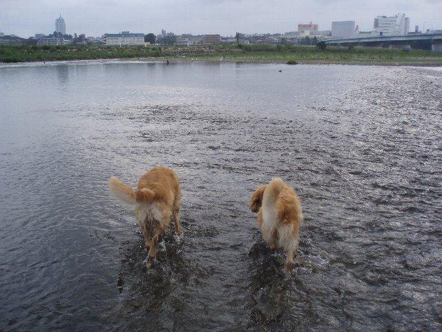 多摩川 003