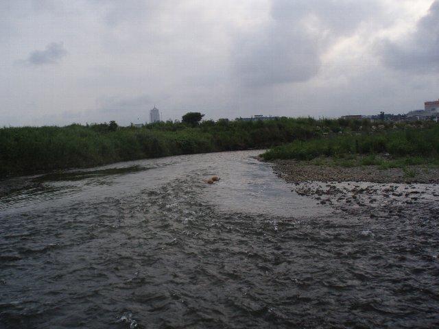 多摩川 010