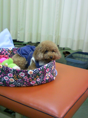 診療室のアイドル