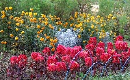 02秋の花々