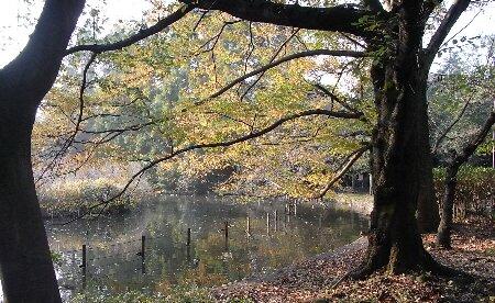 01善福寺公園の秋色