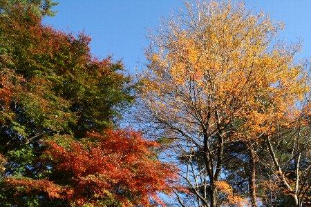 002紅葉が綺麗