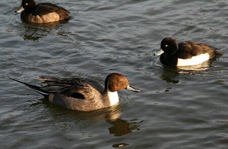 04上池の鳥さん達