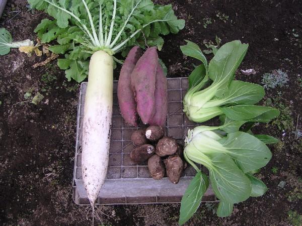 PB200026.JPG野菜