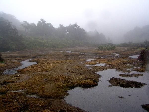 P4070016.JPG花之江河
