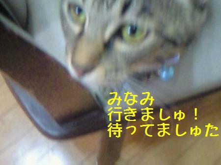 みなみ081217_1a