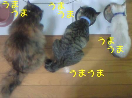 エルみなみサリー081217_1