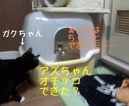 東京都Hアズ081217_2
