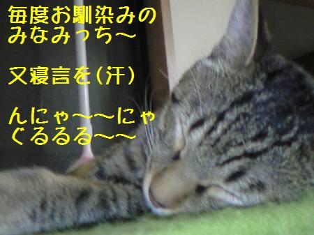 みなみ081219_1a