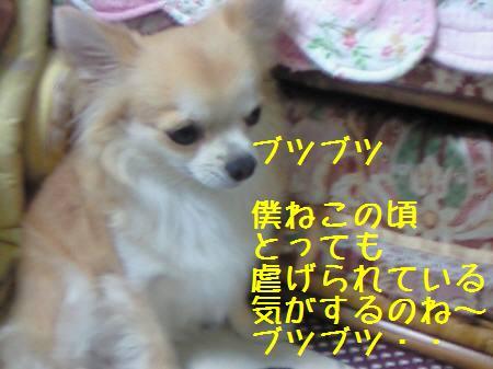 小太郎081219_1a