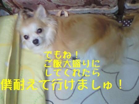 小太郎081219_2a