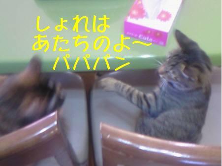 エルみなみ081221_2a
