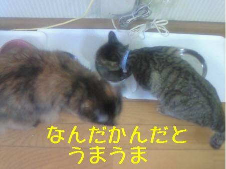 エルみなみ081221_1a