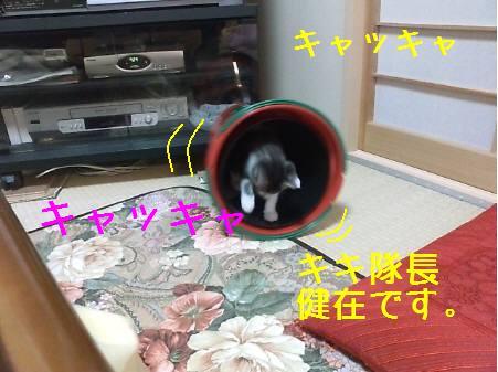 神奈川県Oマロン081222_2a