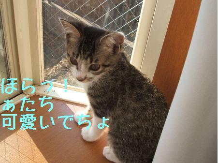 神奈川県Oマロン081222_4a