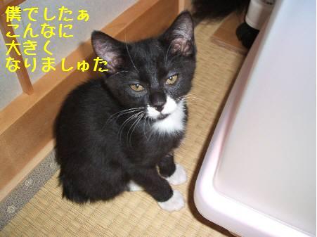 神奈川県Oみるく081222_8a