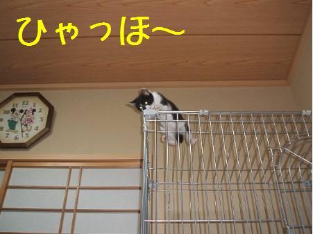 神奈川県O來夢081222_5a