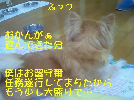 小太郎081223_1a
