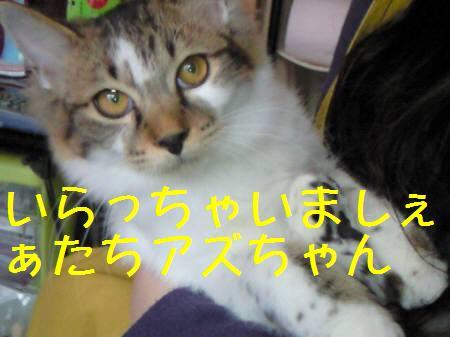 東京都Hアズ081224_1a