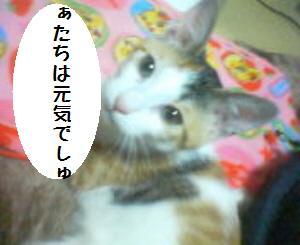 ミィーちゃん090105