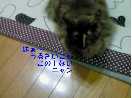エル_090125_1