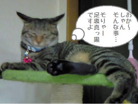 み~たん090128_2