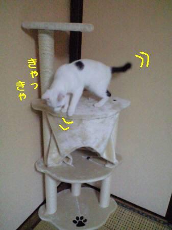 ショウタロウ君090131